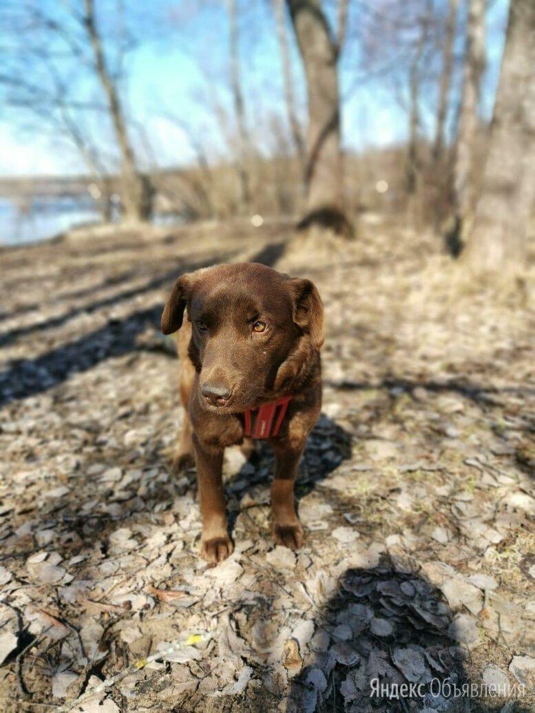 Миниатюрная собачка в добрые руки по цене даром - Собаки, фото 0
