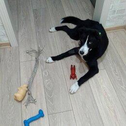 Собаки - Отдам в хорошие руки прекрасную собаку, 0
