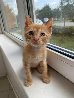 Кошки - Как пройти мимо этих глазенок...., 0