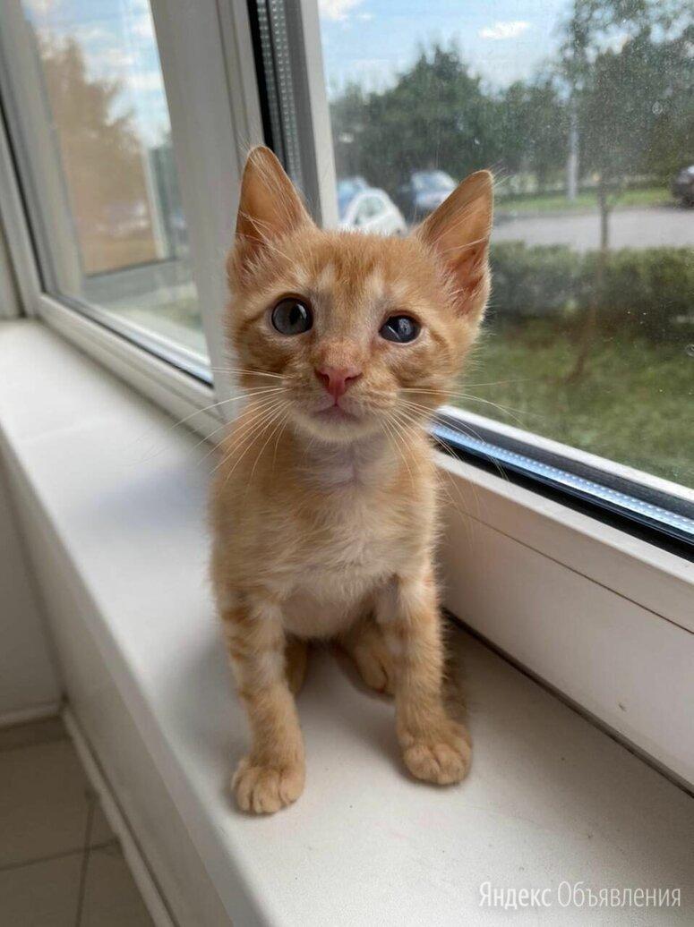 Как пройти мимо этих глазенок.... по цене даром - Кошки, фото 0