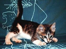 Кошки - Котенок Пашка родился в рубашке, 0
