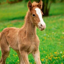 Лошади - Дойные кобылы, 0