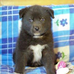 Собаки - Черные щенки без породы, 0
