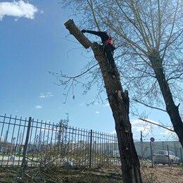 Бытовые услуги - Спил деревьев, 0