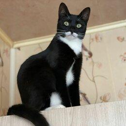 Кошки - Чёрная ласковая красотка Мананочка 8 мес ищет дом, 0