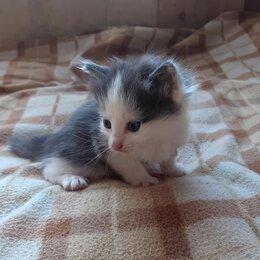 Кошки - Отдадим пушистых котят, 0