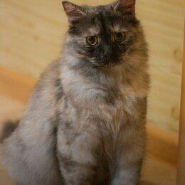 Кошки - Неотразимая пухнастая Молли мечтает о своем доме, 0