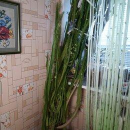 Комнатные растения - Молочай, 0