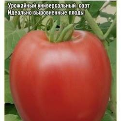 Семена - Томат Коко Шанель (Сиб Сад), 0