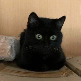 Кошки - Хозяйка кошек уезжает в другую страну... Ищем…, 0