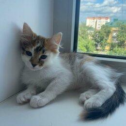 Кошки - Даром кошечка девочка. К лотку приучена., 0