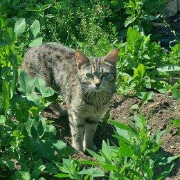 Животные - Кошка-мышеловка в добрые руки, 0