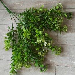 Цветы, букеты, композиции - Зелень для букетов, самшит, 0