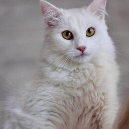 Кошки - Белый в поисках лучшего дома!, 0
