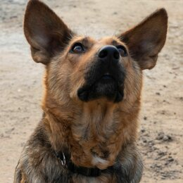 Собаки - Собака друг, 0