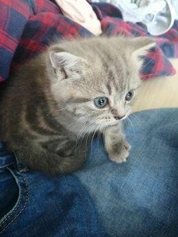 Кошки - Маленькие комочки, 0