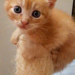 Кошки - Продаю котят за 10руб. приучены к туалету и сами едят , 0