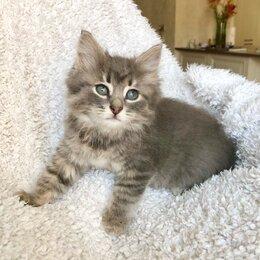Кошки - Пушистый котёнок Пухлик ищет дом., 0