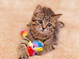 Кошки - Озорная девочка Кети ищет семью., 0