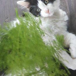 Кошки - Котенок девочка 2.5 мес в дар, 0