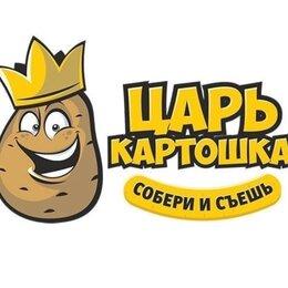 Бухгалтеры - Царь Картошка, 0