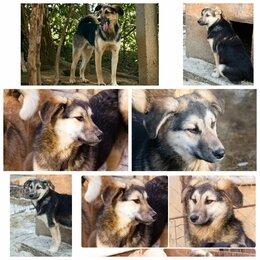 Собаки - Верный друг и лучший охранник Гаара! , 0
