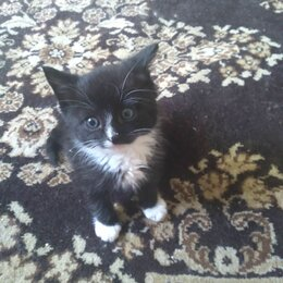 Кошки - Маленькие котята до 2 месяцев, 0