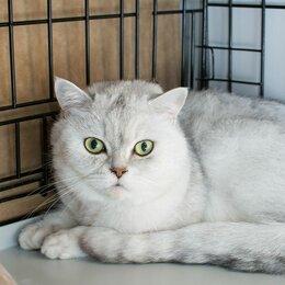 Кошки - Кот Максимус остался один, когда хозяева переехали жить за границу, 0