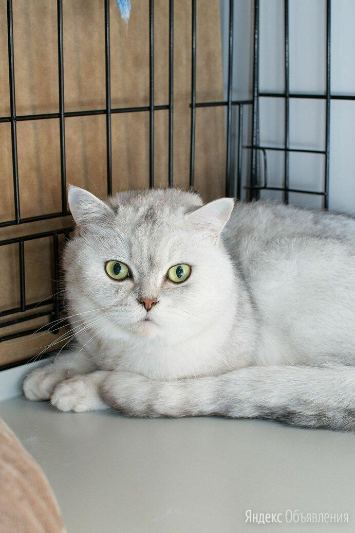 Кот Максимус остался один, когда хозяева переехали жить за границу по цене даром - Кошки, фото 0
