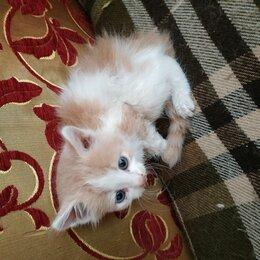 Кошки - Рыже белый котенок, 0