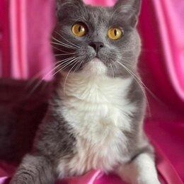 Кошки - Надоевшую детям кошку решили выбросить, как ненужную игрушку...., 0