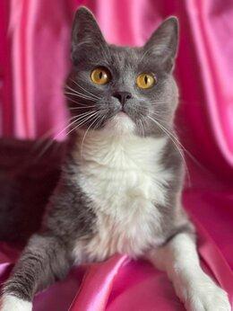 Кошки - Надоевшую детям кошку решили выбросить, как…, 0