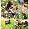 Щенки Лайки  Вельск Архангельской области по цене 6000₽ - Собаки, фото 4