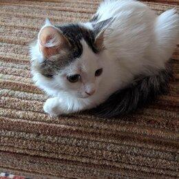 Кошки - Две милые маленькие кошечки., 0
