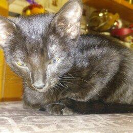 Кошки - Черный котенок, 0