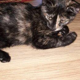 Кошки - Котик в добрые руки, 0