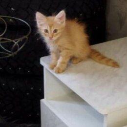 Кошки - Рыжий котенок вырастет котом, 0