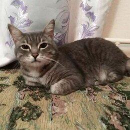 Кошки - Кот серый, 0