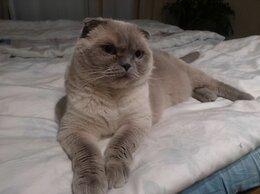 Кошки - Отдам кота в хорошие рукиl, 0