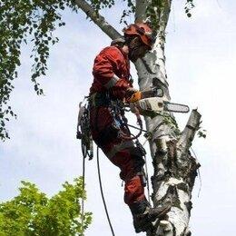 Бытовые услуги - Спил и обрезка деревьев, расчистка участков, 0
