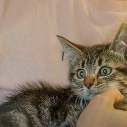 Кошки - 2-х месячный красавчик Фредди ищет дом, 0