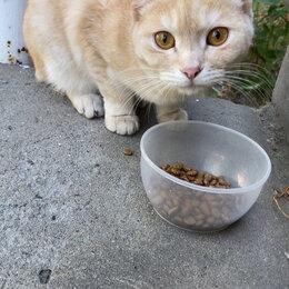 Кошки - Молодые коты ищут дом, 0