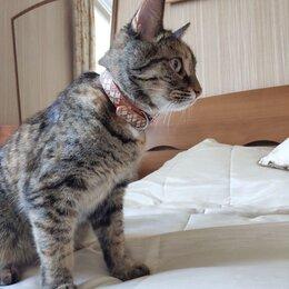 Животные - Пропала кошка, 0