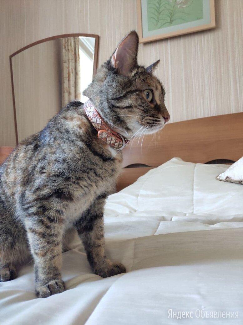 Пропала кошка по цене не указана - Животные, фото 0