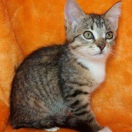 Кошки - Очень ручная ласковая девочка Джерри 4 мес ищет до, 0