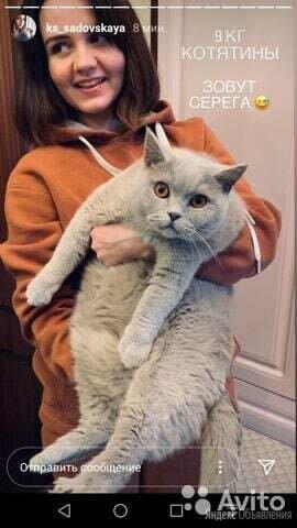 Животное по цене 1₽ - Кошки, фото 0