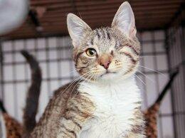 Кошки - Котенок Пурсефона, спасенный с улицы, 0