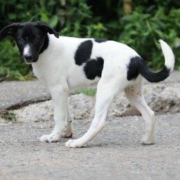 Собаки - Стерилизованная девочка-подросток, 0