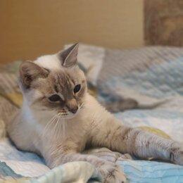 Кошки - Кошечка в добрые руки , 0