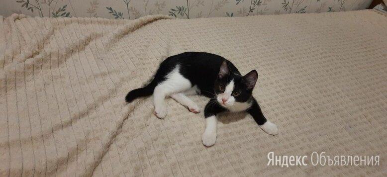 Рада по цене даром - Кошки, фото 0